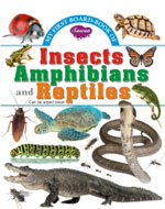 My First Board Book of  Insects Amphibians & Reptiles